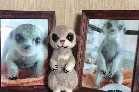 【羊毛フェルト】ミーアキャット・永希くんのお届け後のお写真をいただきました!