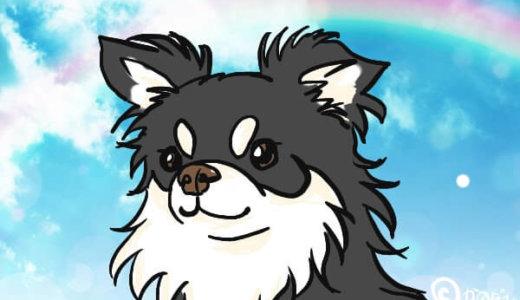虹の橋を渡り天国へと旅立った愛犬のチワワ。ペットロスになった私